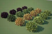 Shrub 1 - Maxwell Ready 3d model