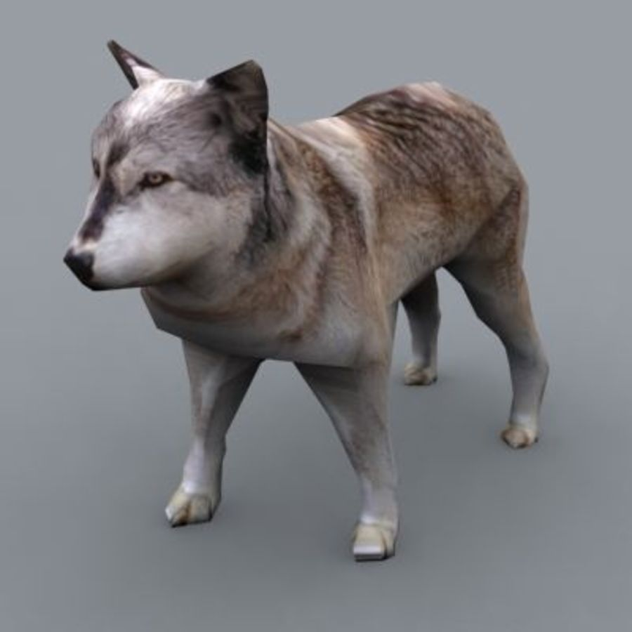 Wolf royalty-free 3d model - Preview no. 2