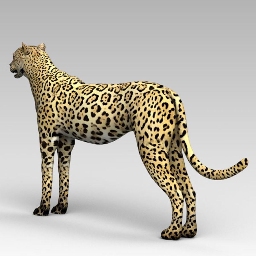Cheetah royalty-free 3d model - Preview no. 4