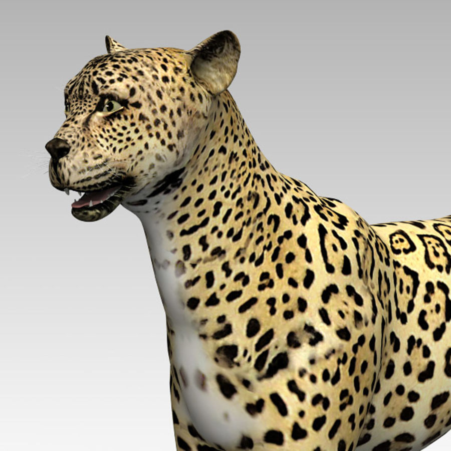 Cheetah royalty-free 3d model - Preview no. 6