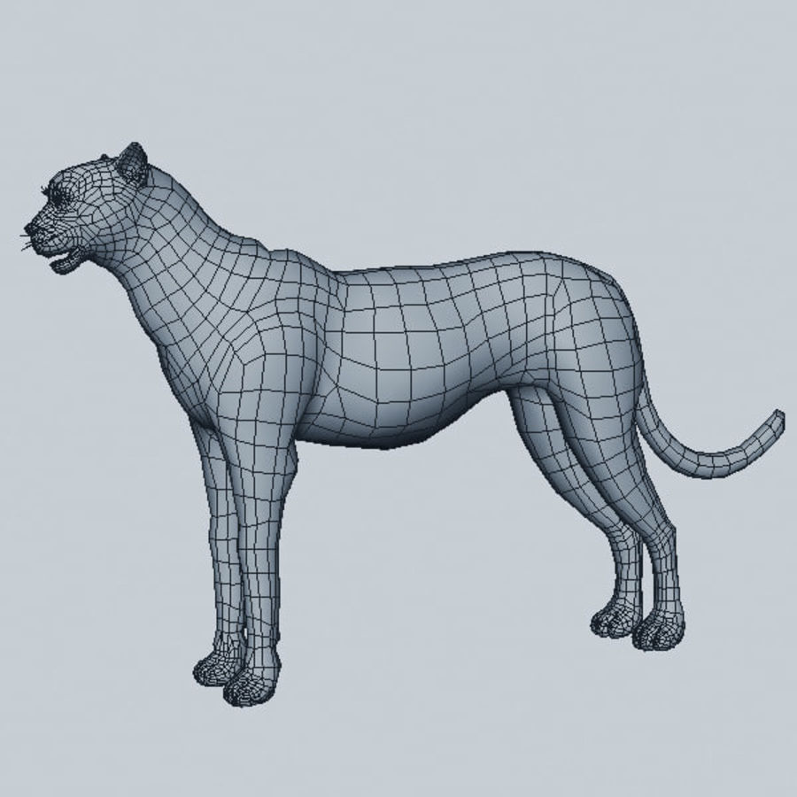 Cheetah royalty-free 3d model - Preview no. 7
