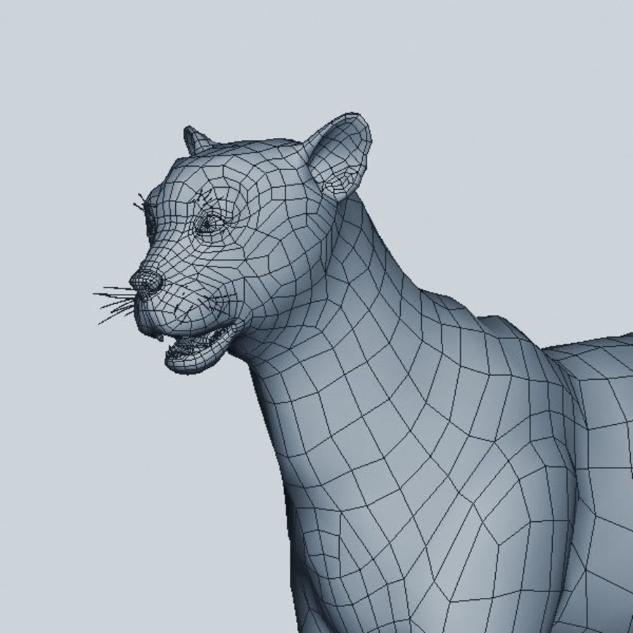 Cheetah royalty-free 3d model - Preview no. 8