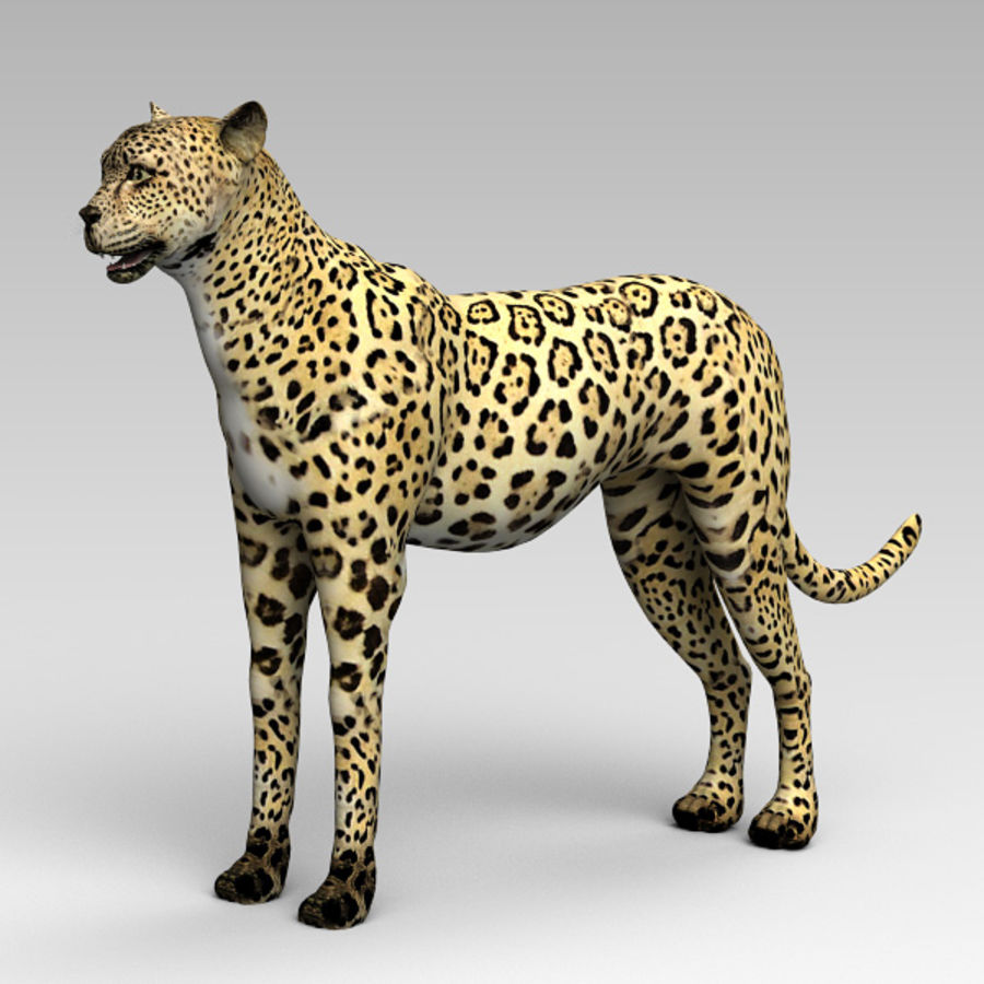 Cheetah royalty-free 3d model - Preview no. 2