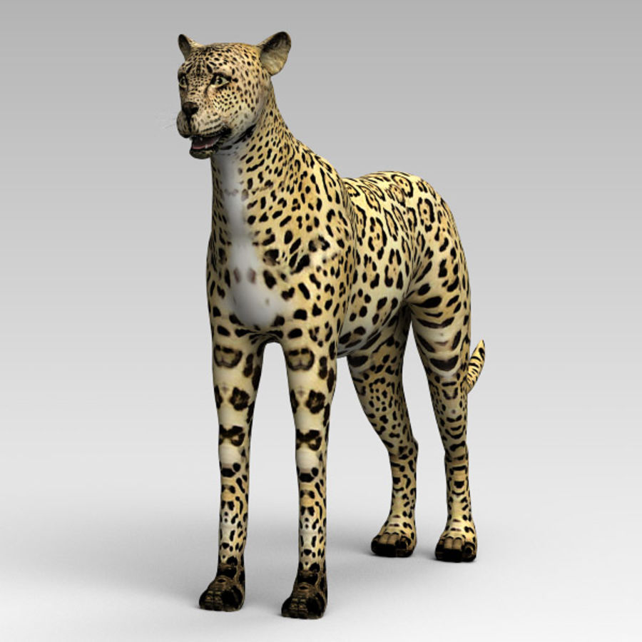 Cheetah royalty-free 3d model - Preview no. 5