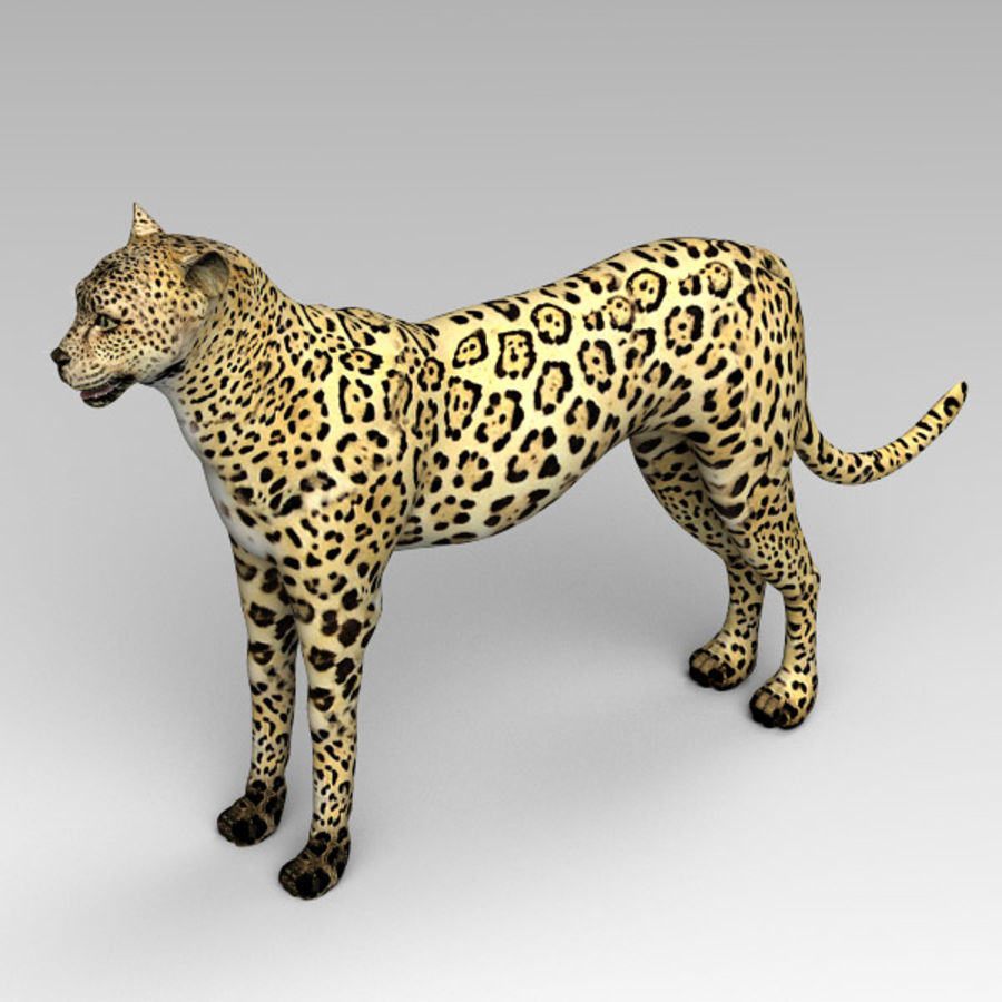 Cheetah royalty-free 3d model - Preview no. 3