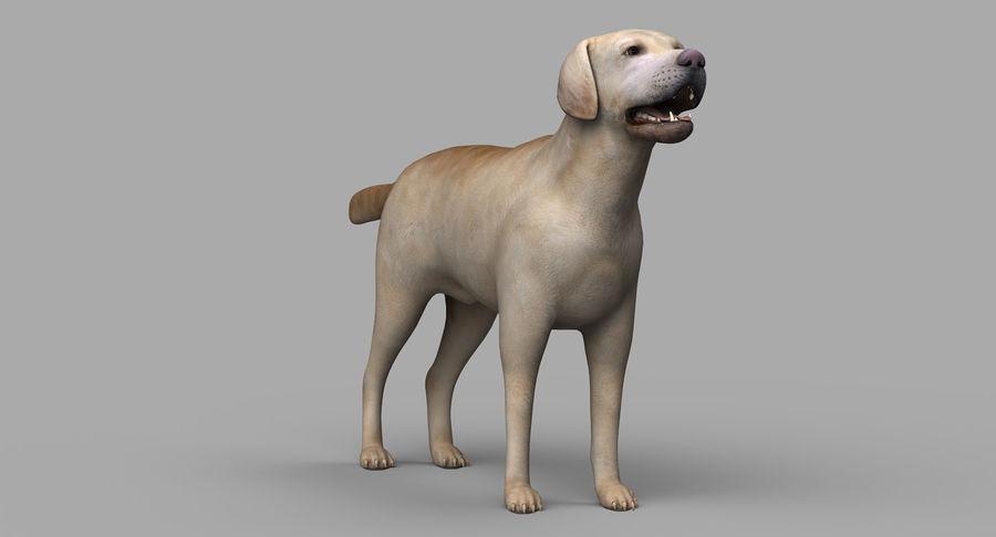 Labrador royalty-free 3d model - Preview no. 8