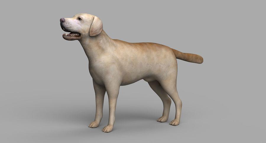 Labrador royalty-free 3d model - Preview no. 4