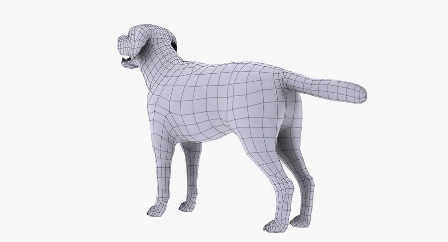 Labrador royalty-free 3d model - Preview no. 14