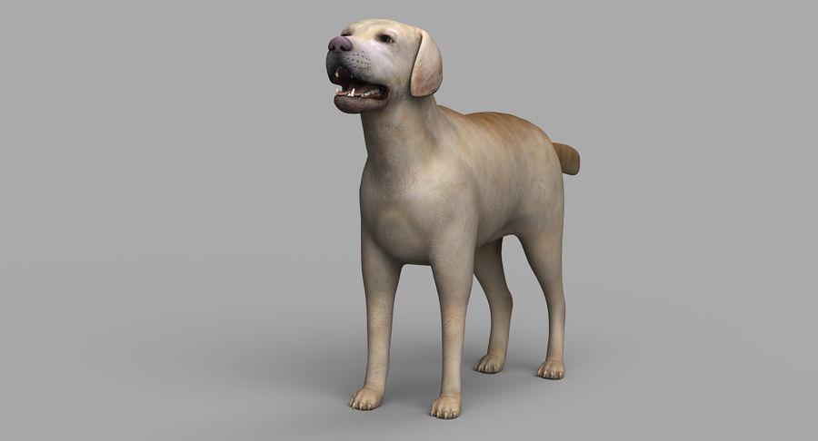 Labrador royalty-free 3d model - Preview no. 7