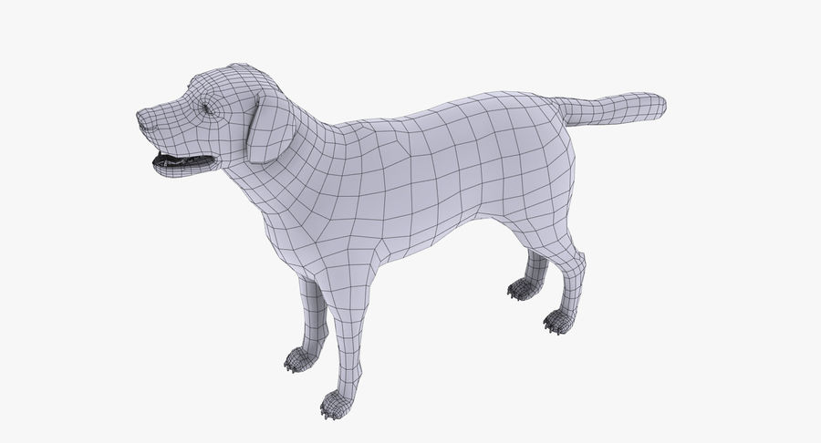 Labrador royalty-free 3d model - Preview no. 15