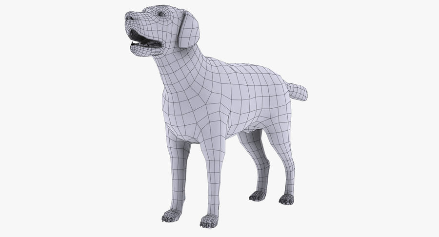Labrador royalty-free 3d model - Preview no. 13