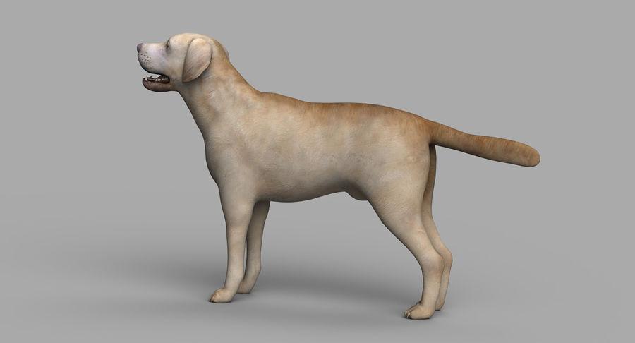 Labrador royalty-free 3d model - Preview no. 5