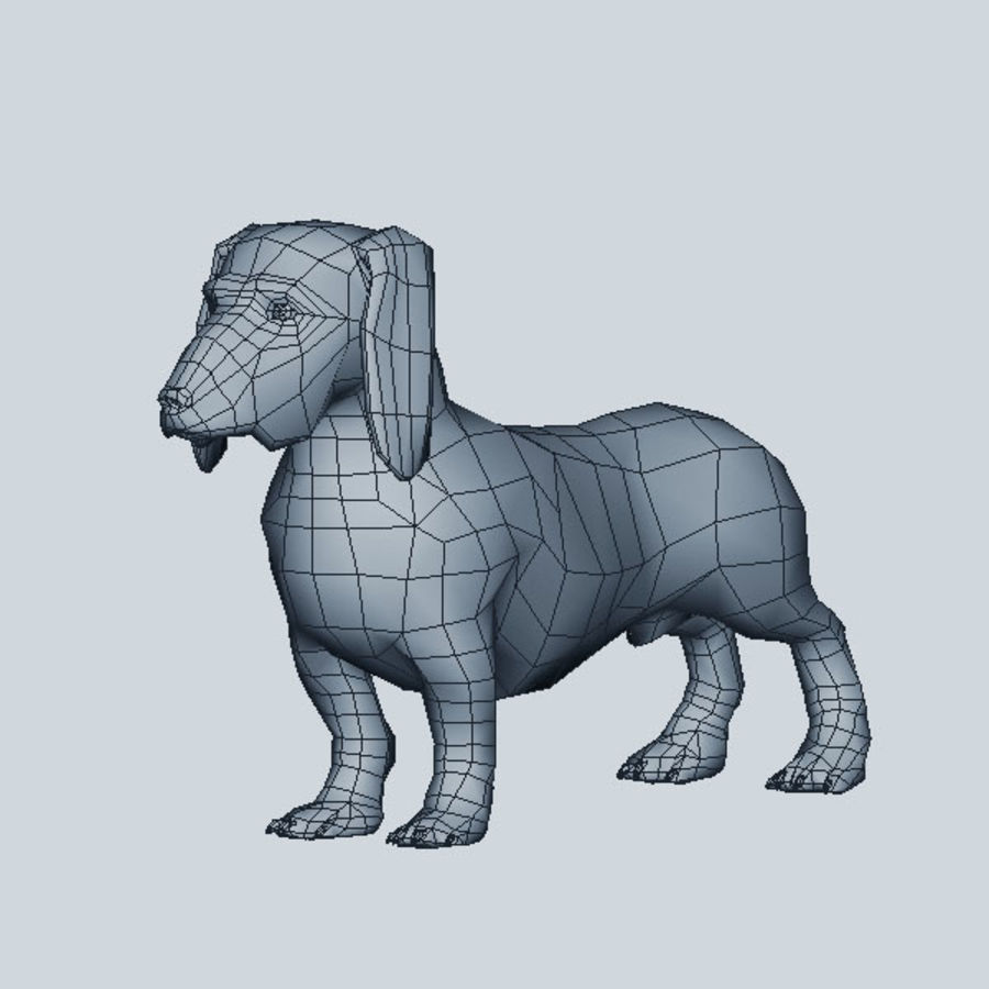 Köpek Dachshund royalty-free 3d model - Preview no. 6