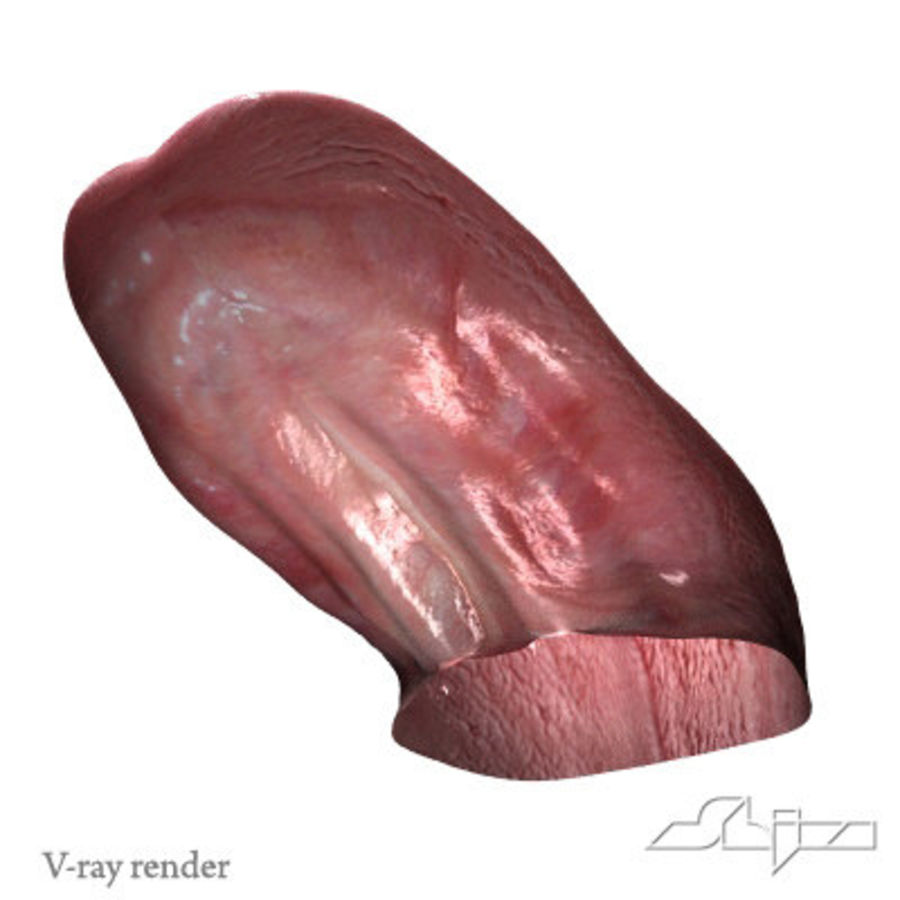 Dog Tongue royalty-free 3d model - Preview no. 9