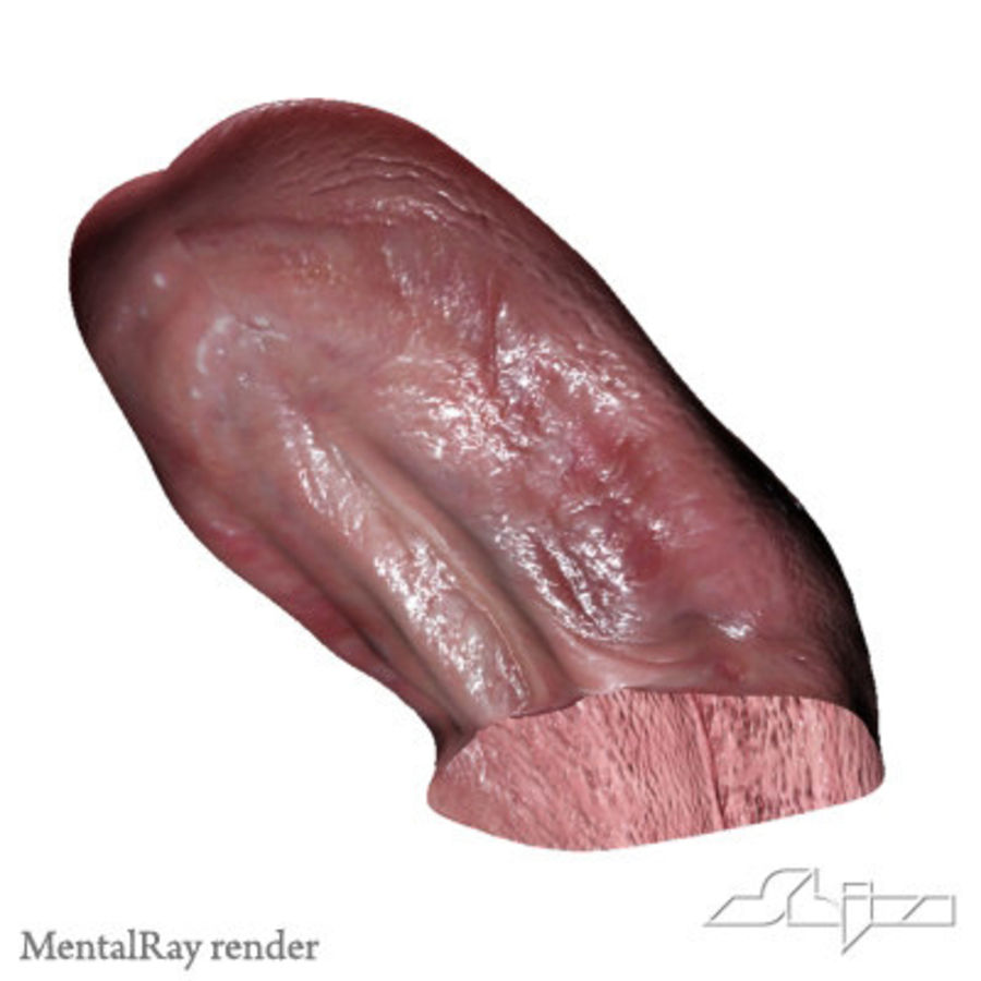 Dog Tongue royalty-free 3d model - Preview no. 8