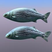 pesciolino 3d model