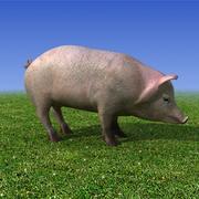 Świnia Low poly 3D Model 3d model