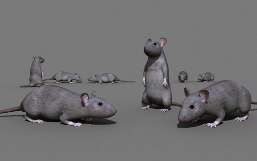 ratto royalty-free 3d model - Preview no. 1