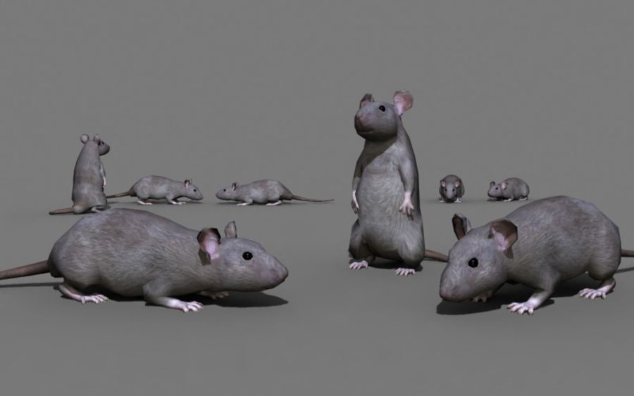 ratto royalty-free 3d model - Preview no. 3