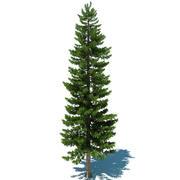 Pine Tree D 3d model