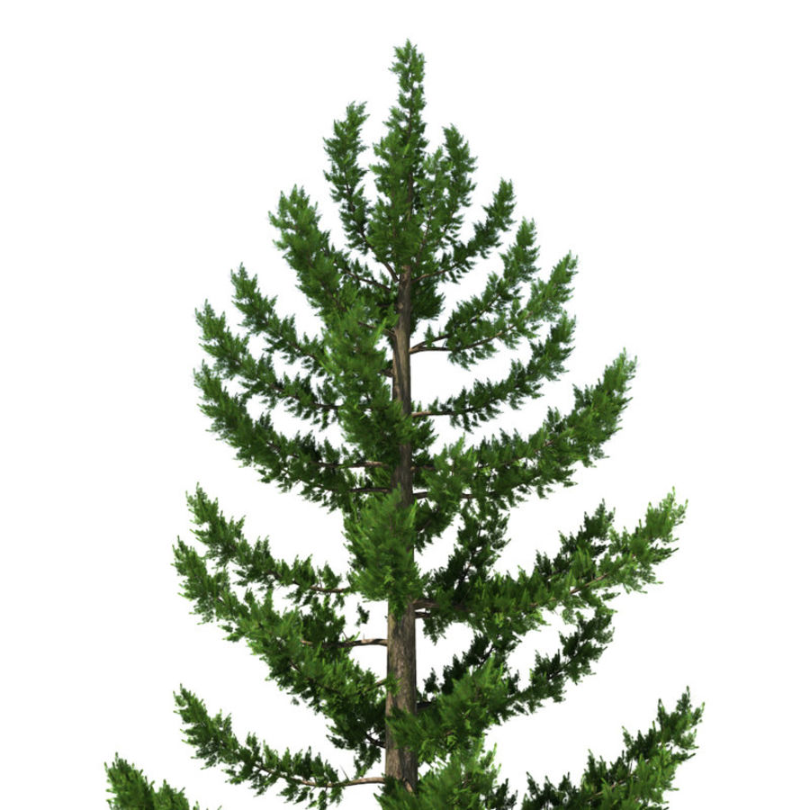 Pine Tree A royalty-free 3d model - Preview no. 2