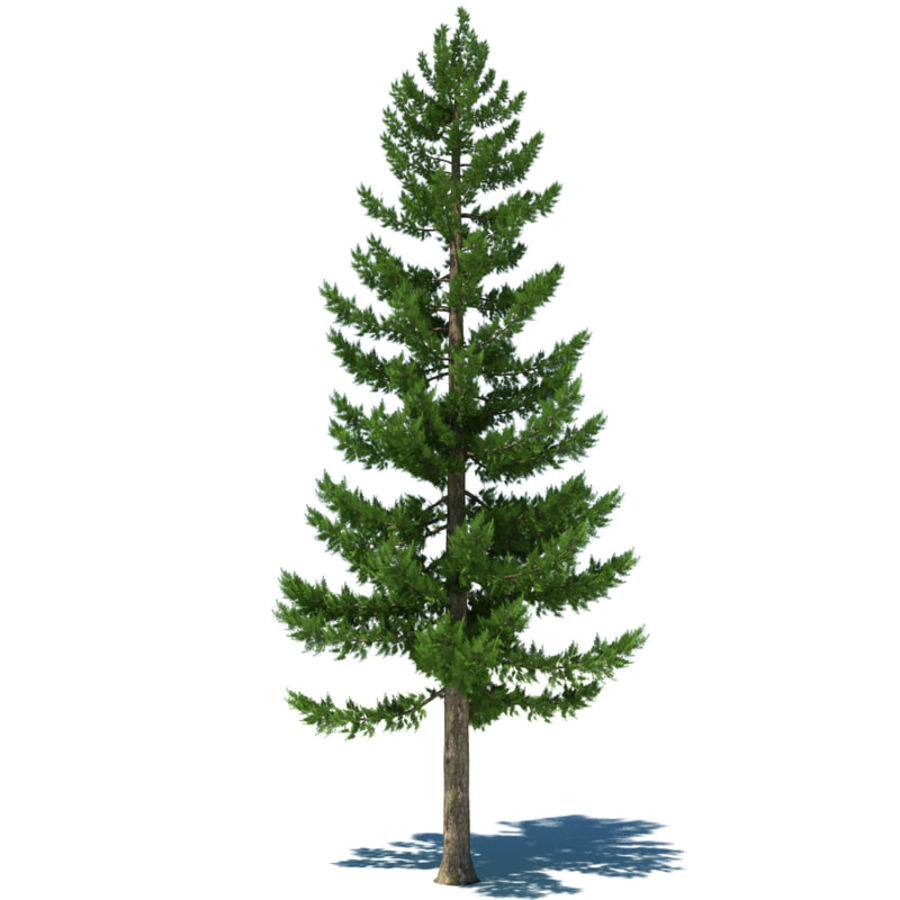 Pine Tree A royalty-free 3d model - Preview no. 1