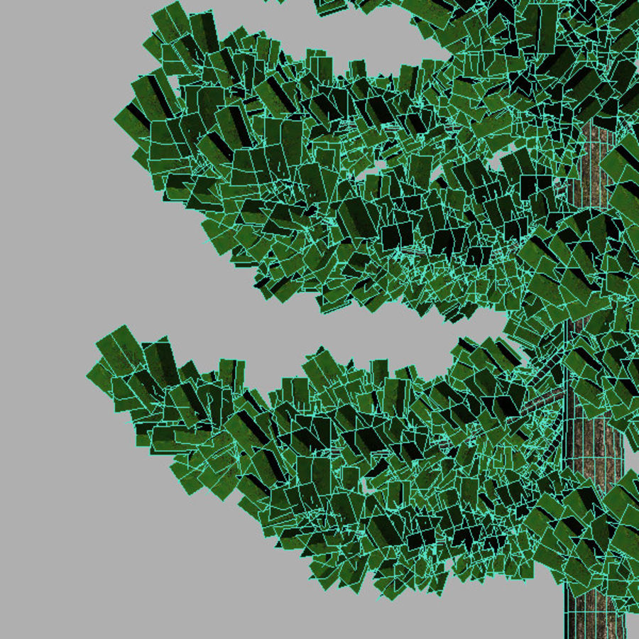Pine Tree A royalty-free 3d model - Preview no. 3