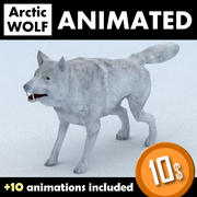 Loup arctique 3d model