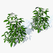 Seedlings Passionflower 3d model
