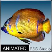 Tropical Fish 14 3d model