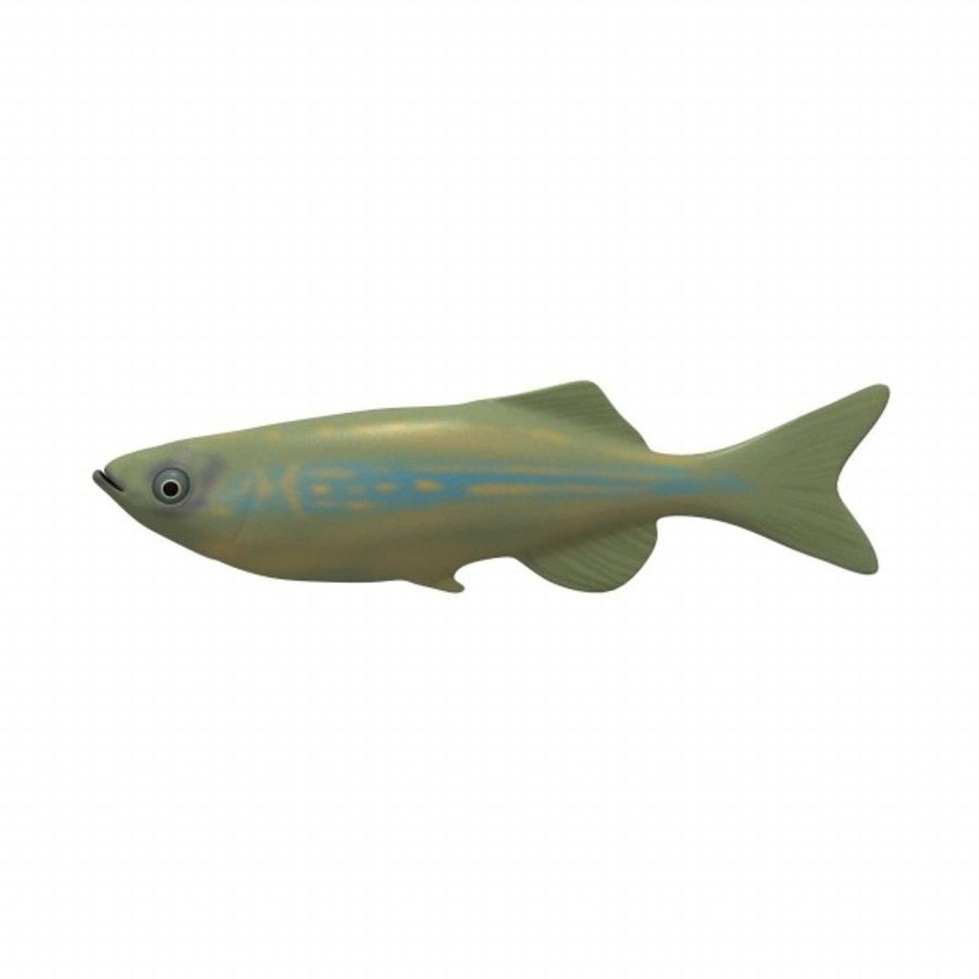 fish2 royalty-free 3d model - Preview no. 1