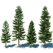 Pine Tree Collection 3d model
