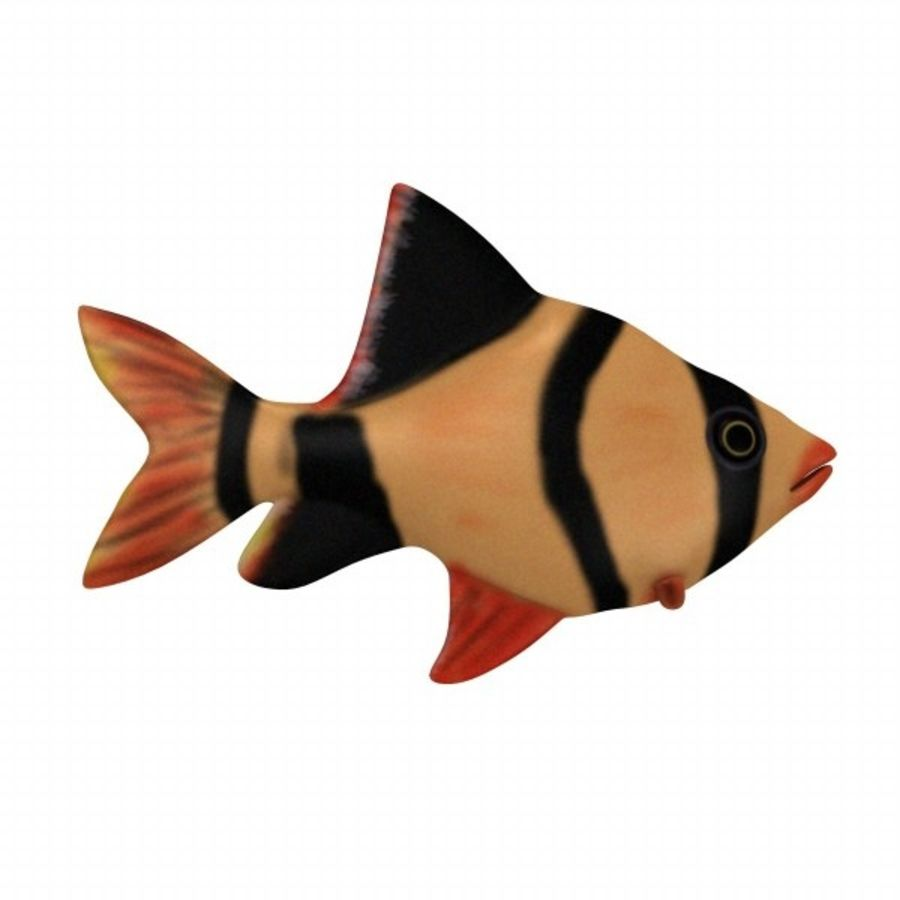 fish3 royalty-free 3d model - Preview no. 1