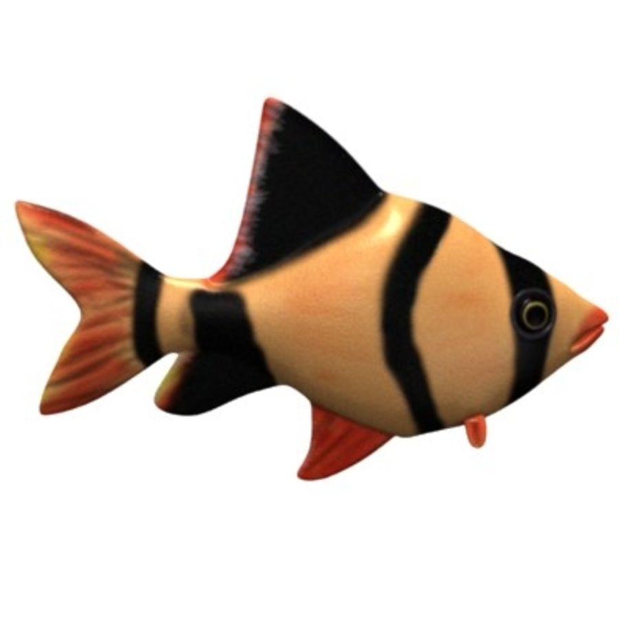 fish3 royalty-free 3d model - Preview no. 2