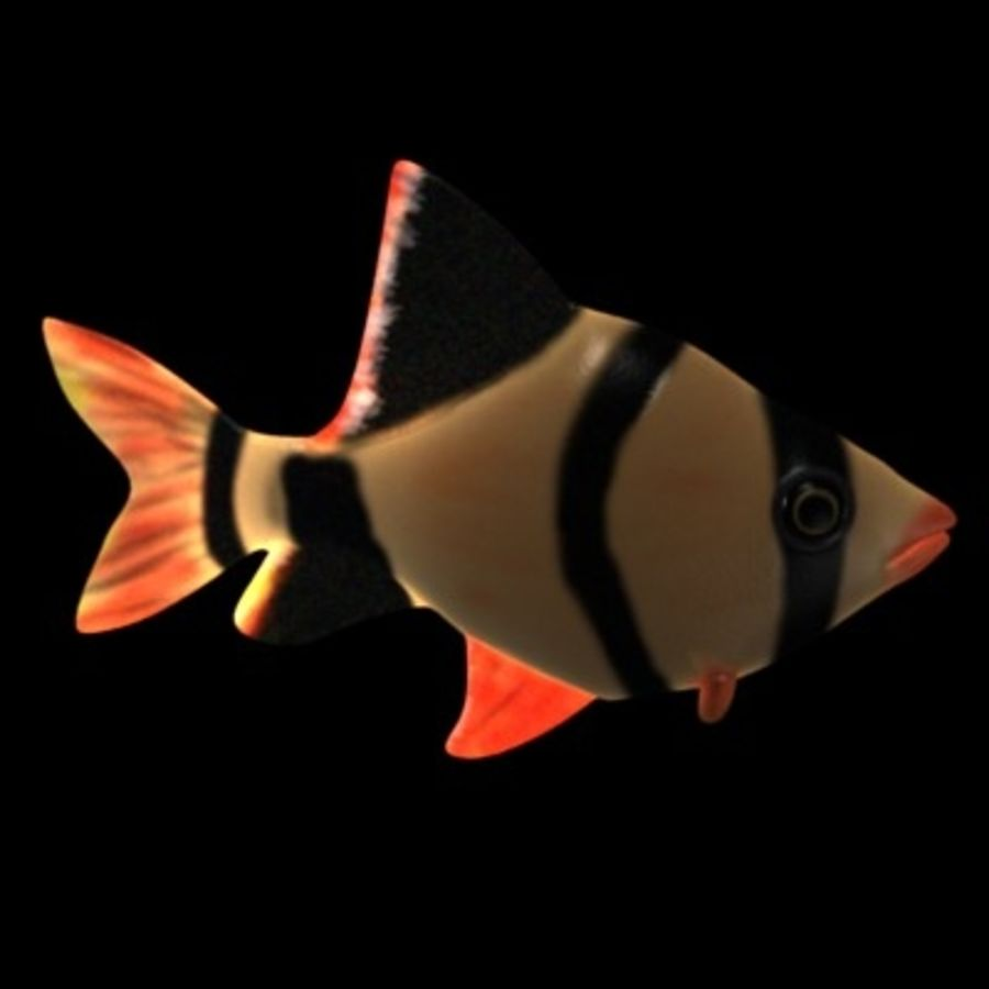 fish3 royalty-free 3d model - Preview no. 4