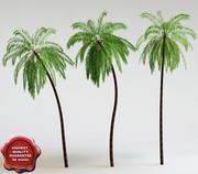 코코스 나무 손바닥 3d model