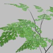 Adiantum.rar 3d model