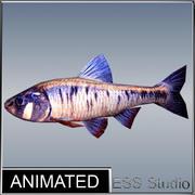 강 물고기 3d model