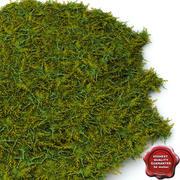Juniperus Chinensis 'Gold Coast' 3d model