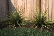 Ornamental Grass 4 - Mental Ray Ready 3d model