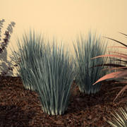Ornamental Grass 2 - Vray Ready 3d model