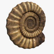 Ammonite Fossil 3d model