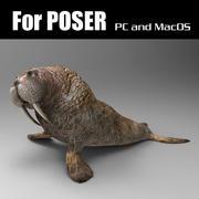 Walrus for Poser 3d model