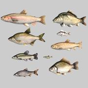 9 fisk 3d model