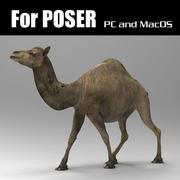 Camel for Poser 3d model
