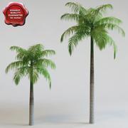 Palm Roystonea elata 3d model