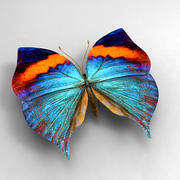 Butterfly 3 3d model