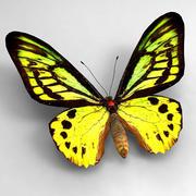 Butterfly 1 3d model