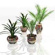 Potted Plants 3d model
