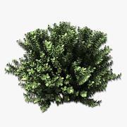 Green Cloud Sage 3d model